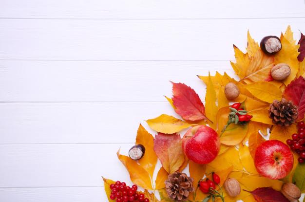 jesien-liscie-z-jagodami-i-owoc-na-bielu_106006-673