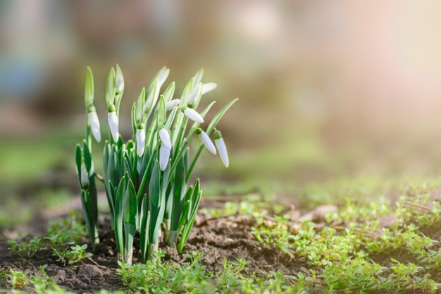 Wiosna idzie przez świat