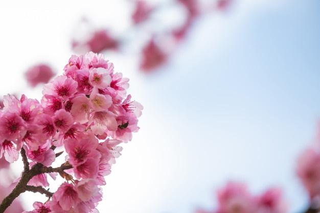 Wiosna w sadzie i ogrodzie